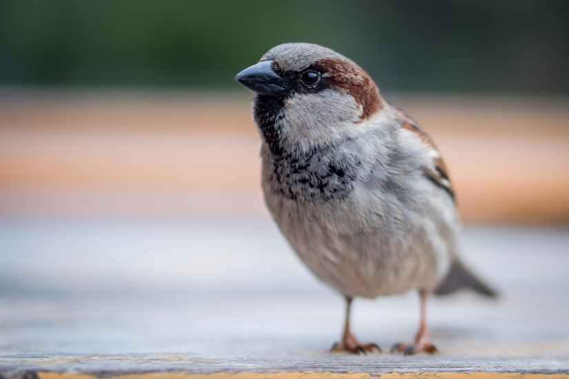 avian beak bird blur