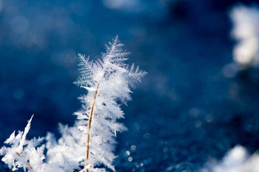 macro photography of snowflakes